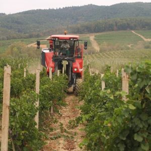 vinogradarstvo15