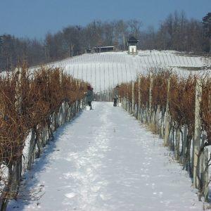 vinogradarstvo21