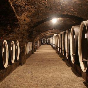 vinogradarstvo23