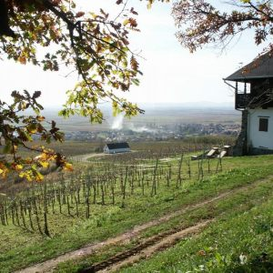 vinogradarstvo27